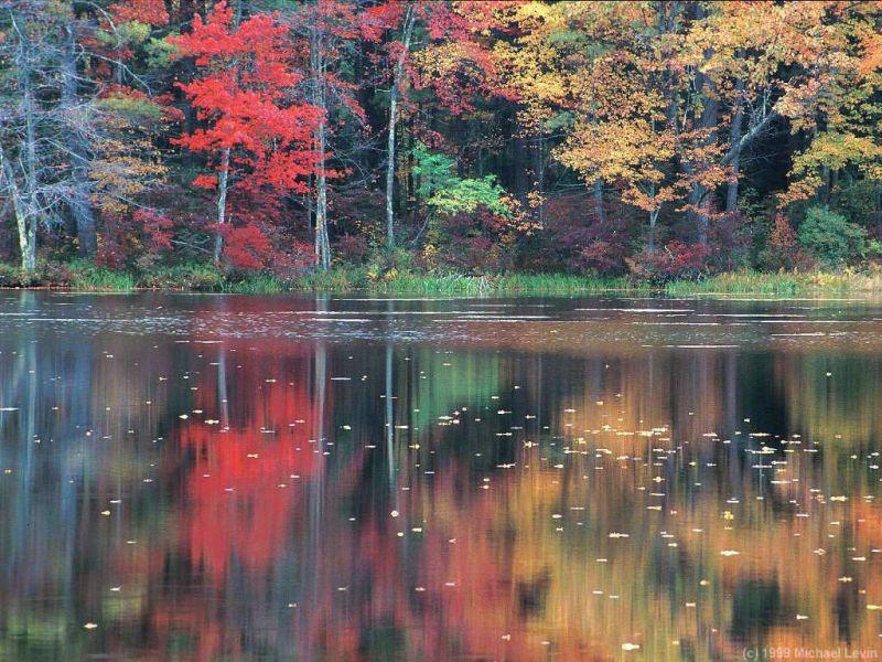 automnejpg.jpg