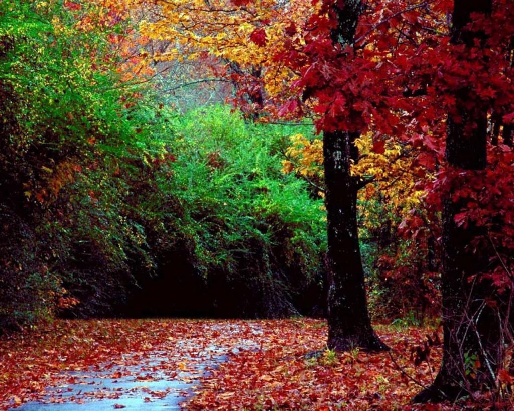LE BONHEUR C EST DANS LA POCHE dans nature paysage-d-automne