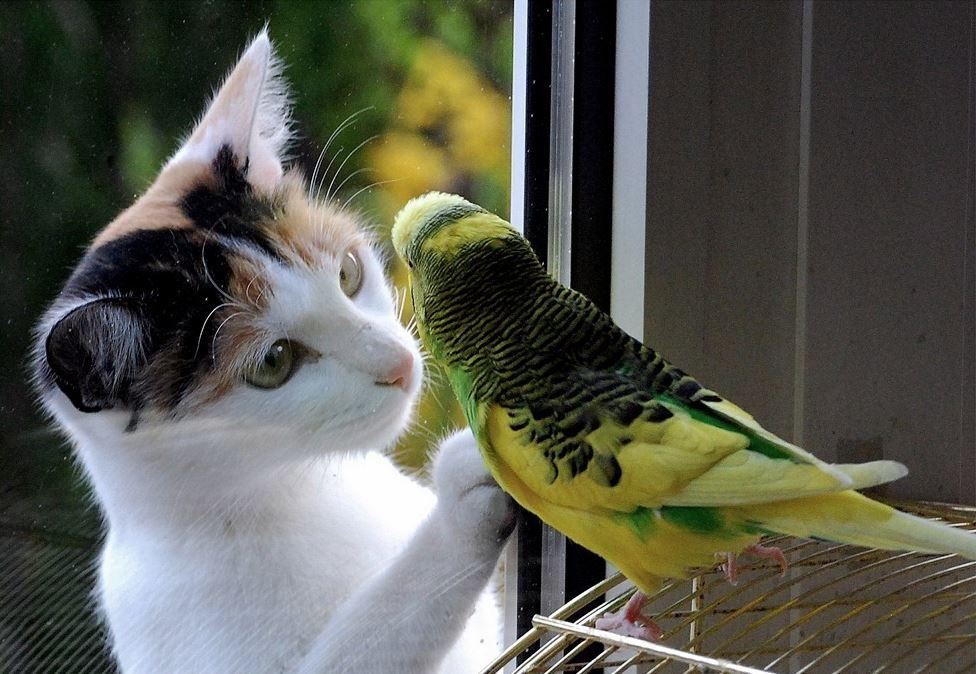 chat et oiseau