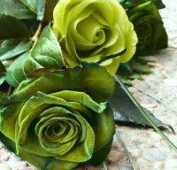 roses verte