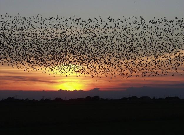 merles-vol-volant-ciel-coucher-de-soleil-nuages-oiseaux_121-69598