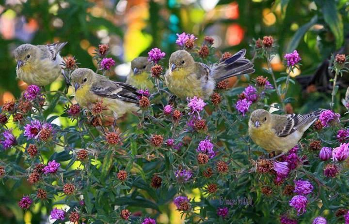 oiseaux 123